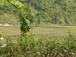 The countryside near Chiang Rai