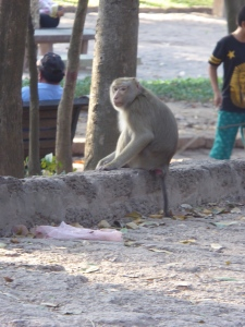 Monkey outside Wat Phnom
