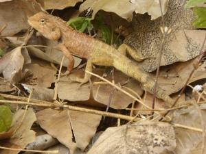 A cute lizard