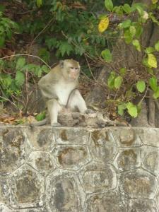 A Kep monkey