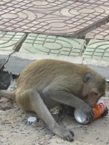 Monkey drinking juice