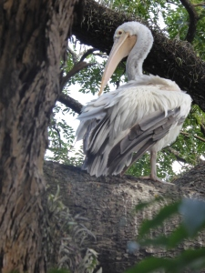 Bird in Kandy