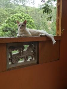 Cat in Ella