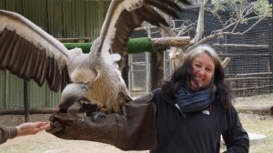 Feeding a vulture -- it was heavy!