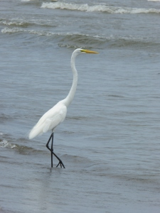 I'm assuming this is an egret