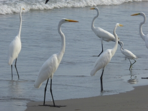 More birds on the beach