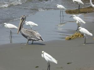 Birds at the beach