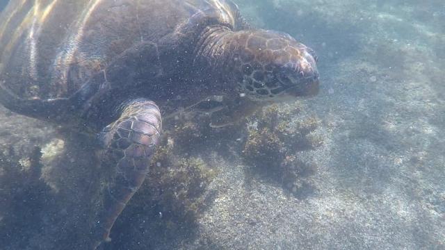 Turtle Los Tuneles 02